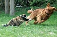 Kedi Köpek Kavgası! Kim Kazanır :)