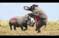 Hayvanlar Savaşı Nefes Kesiyor