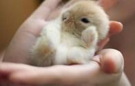 Sevimlilik Suç Olsa Müebbet Yiyecek Tavşan Yavrusu