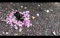 Yok Böyle Bir Güzellik. Arının Etrafına Gül Donatan Karıncalar