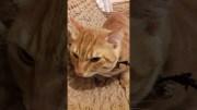 Psikopat Kedi Haydar'la Tanışın