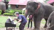 Hayvanların Müzik Aletlerine Muhteşem Tepkileri