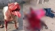 Bir Başka Köpeğe Saldıran Pitbull'u Onlarca Kişi Ayıramadı