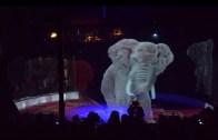 Bildiğiniz Sirkleri Unutun: Karşınızda Holografik Sirk