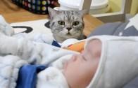 Kedilerin Bebeklerle Tanışması
