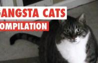 Kedi Serseriliği Diye Bir Şey Varsa Bunlar Da Kanıtları!