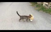 Komşunun Evinden Oyuncak Çalan Kedi