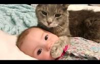 Bu Videoya Doyamayacaksınız: Kediler ve Bebekler