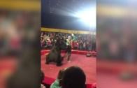Haklı Gibi Bir Hareket! Sirkteki Ayı Eğitmenine Saldırdı