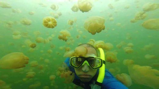 binlerce denizanası arasında yüzmek