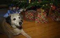 Köpeği Ölen Bir Adama Ailesinin Yaptığı Tatlı Sürpriz