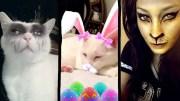 kedi-filtresi