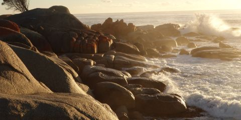 australie-bay-of-fires-tasmanie-voyage-travel-plage