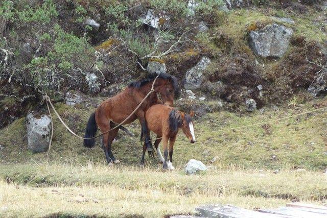 Perou-Laguna 69: Mais non vous n'avez rien compris les chevaux! On vous a dit 69!!!!!