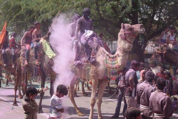 les locaux font la fete des couleurs ou de holi accompagné par leurs chameaux pour le plus grand plaisir des touristes, cela donne une tonalité encore plus indienne photo voyage tour du monde http://yoytourdumonde.fr