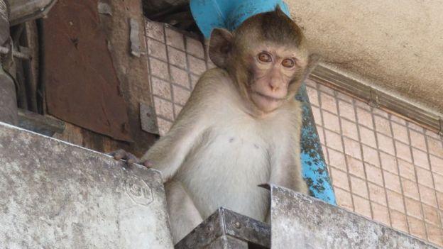 lopburi-singe-rue-thailande-travelling-voyage