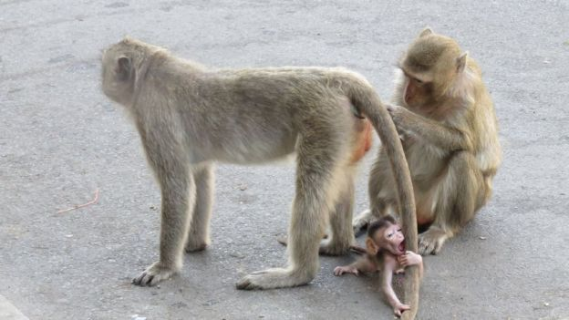 lopburi-famille-singe-thailande-travelling-voyage