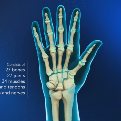 Hand Nerves Diagram Chrysler Sebring Wiring 2004 Anatomy Wrist Orthopaedics Videos Your Practice Online Education