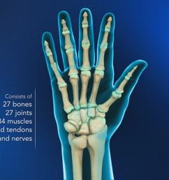 hand anatomy hand wrist orthopaedics videos your practice online education [ 1280 x 720 Pixel ]