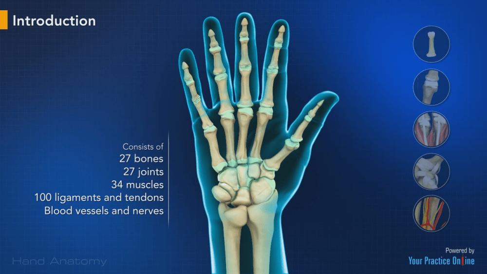 medium resolution of hand anatomy hand wrist orthopaedics videos your practice online education