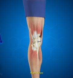 front of the knee diagram [ 1280 x 720 Pixel ]