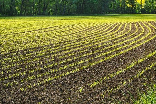 Research finds that dusting stone dust on farmland can absorb billions of tons of carbon dioxide