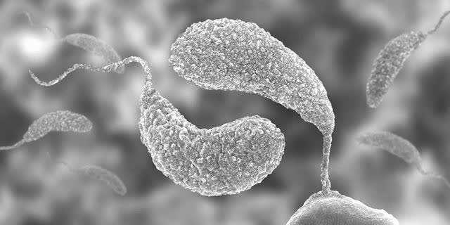 Two signaling molecules determine the survival of bacteria
