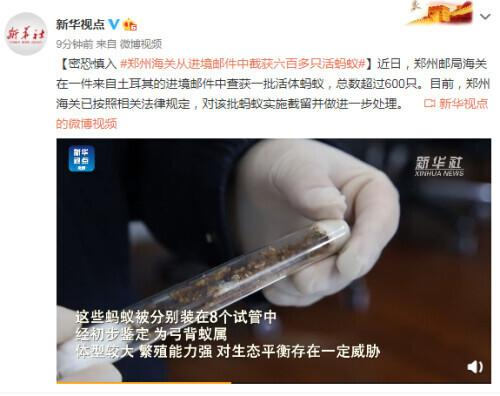 Entering with caution, Zhengzhou Customs intercepted more than 600 live ants from incoming mail