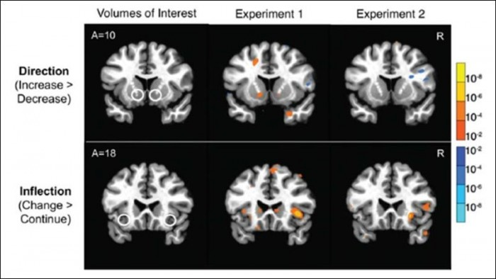 The activity of the brain's risk circuit can predict stock price changes