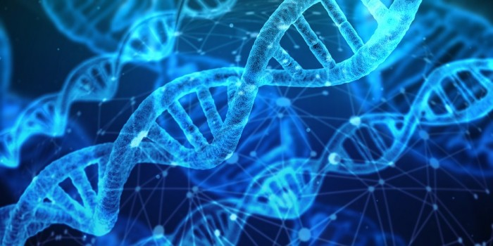 Why do some people live for a hundred years: the body repairs DNA more effectively