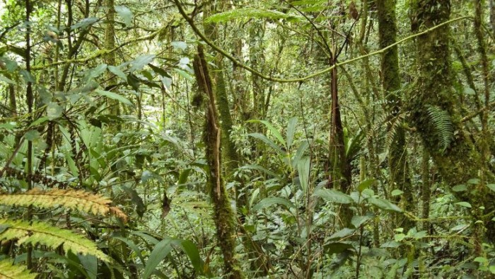 The new index rates the vulnerability of tropical rainforests to climate and human impacts