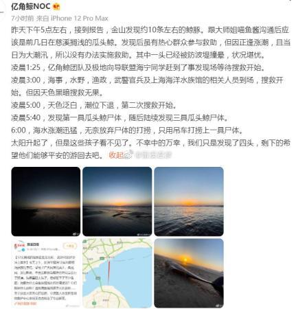 Why did the melon headed whale run aground on the Jinshan Beach in Shanghai? Or take the initiative to look for food, but not familiar with the terrain