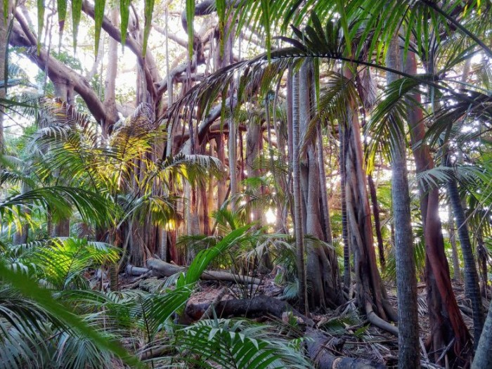 Scientists say deep roots of the Anthropocene can be found in tropical forests