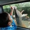 動物との距離が近すぎる!動物と触れ合いたい方にお勧めの東北サファリパーク