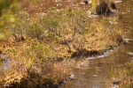 Webb's Mill Bog