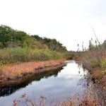 ביצת טאנרסוויל Tannersville Bog