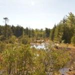 Webbs-Mill-Bog