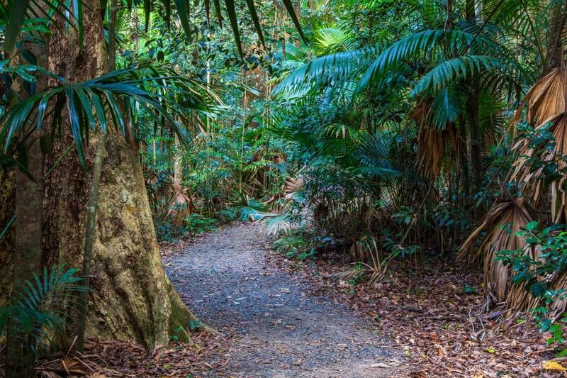 Eungella National Park, Queensland, Australia