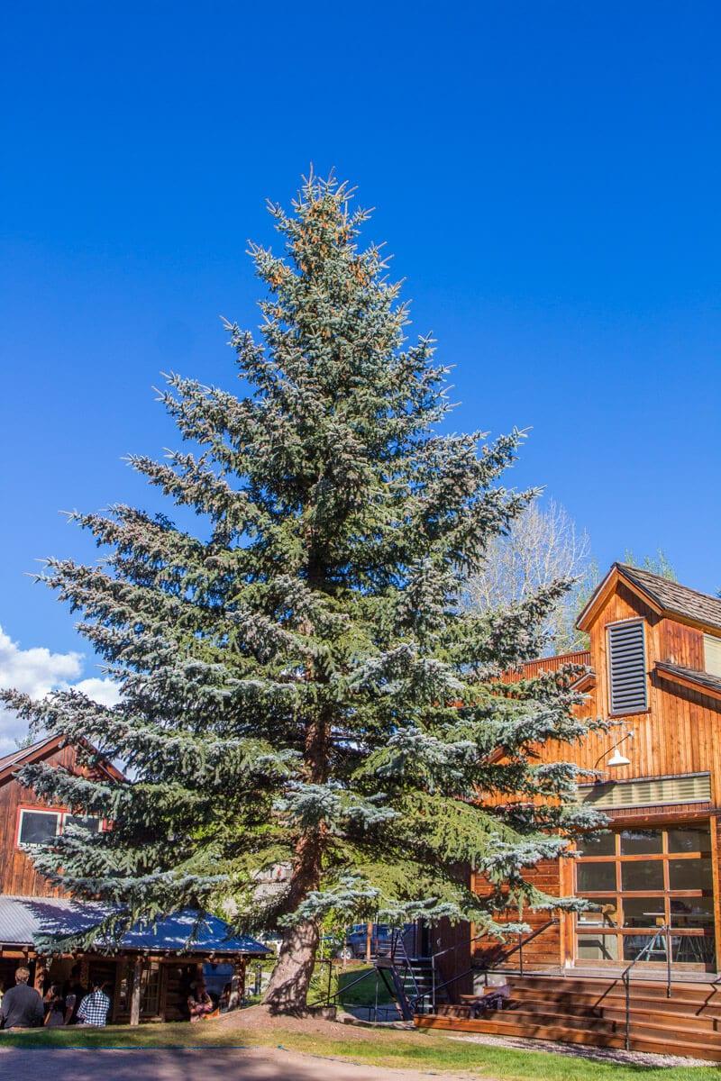 Anderson Art Gallery Ranch Snowmass, Colorado