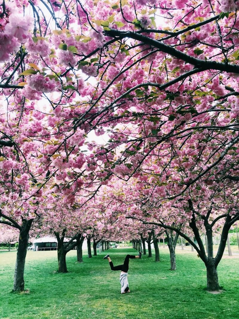 Brooklyn Botanic Garden - one of the best parks in NYC