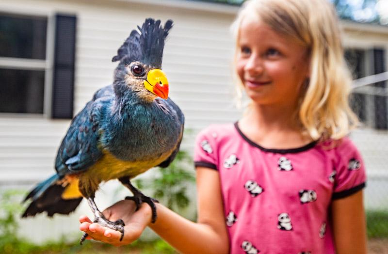 North Florida Wildlife Center, Monticello, Florida
