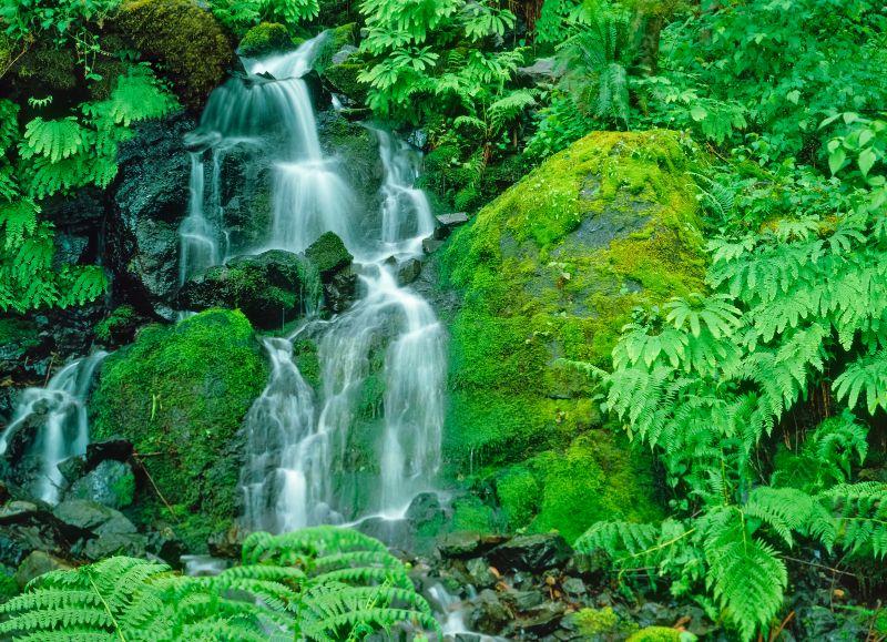 Little Redwood Falls Brookings Oregon