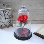美女と野獣のベル型の赤い薔薇