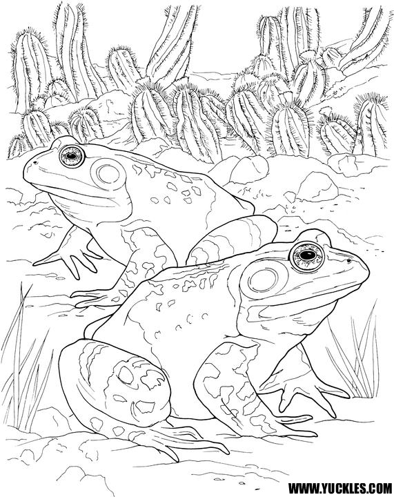 Detailed Reptile Coloring Pages Coloring Pages