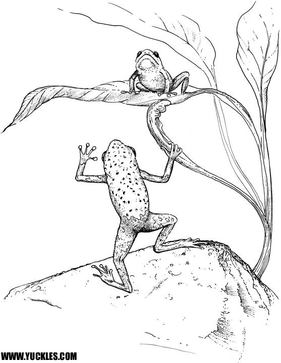 Tree frog Coloring Page by YUCKLES!