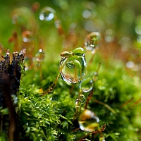 Water-droplets-on-moss-1213992967