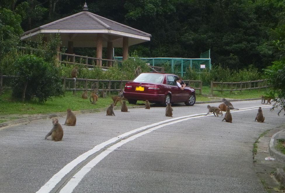 car-feed