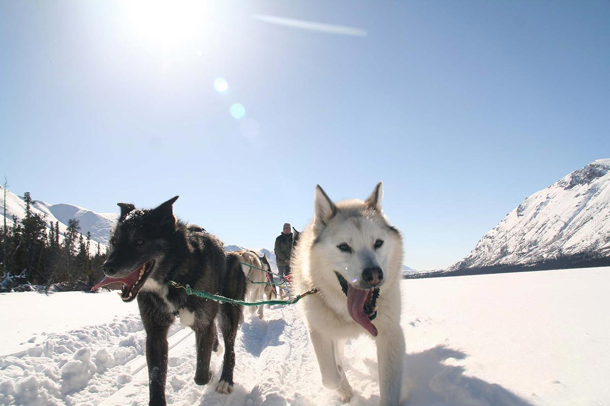 MuktukAdventures  Yukon Territory Alaska Northern British