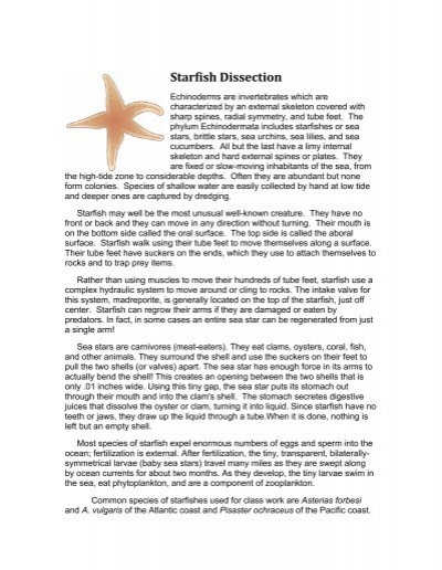 Starfish Dissection