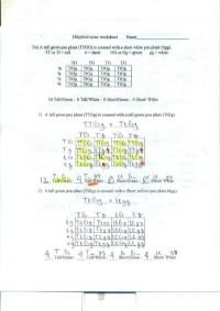 Printables. Dihybrid Cross Worksheet Answers ...